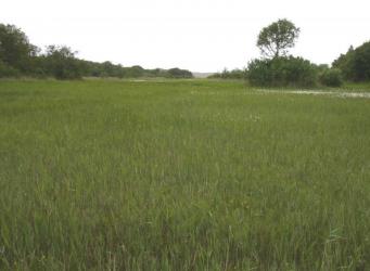 Het centraal gelegen schraalgrasland In Kooibosch-Luttickduin foto Marion Bilius