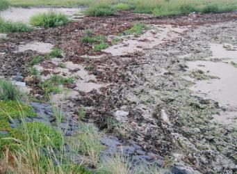 Aangespoelde algen en vloedmerkplanten naast de TESO-haven op Texel.