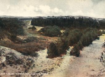 Bosbouw in de duinen