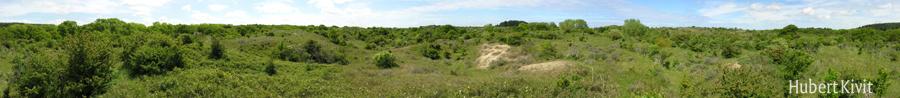 Landschap met duingrasland en struwelen van meidoorn - Hubert Kivit