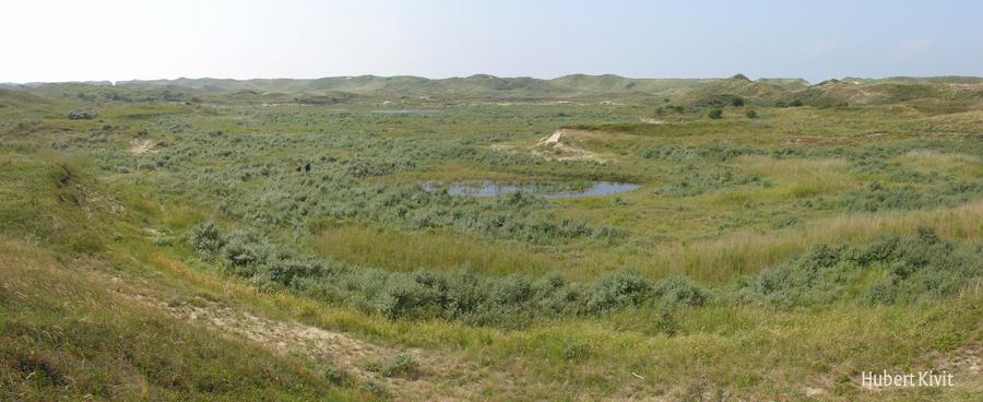 Nieuwe Land - Hubert Kivit