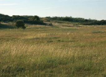 Noordhollands Duinreservaat bij Castricum - water tussen Oldenborgh en Papenberg