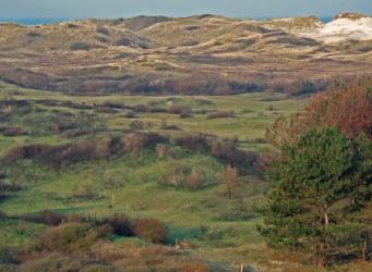 Noordhollands Duinreservaat - van duingebruik naar natuurbeheer