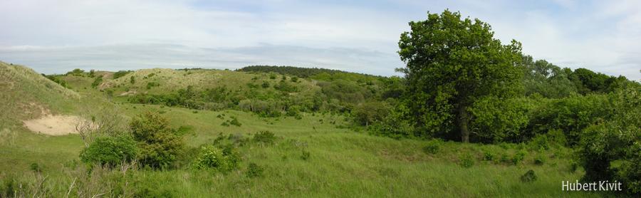 Overgang struweel-grasland - Hubert Kivit