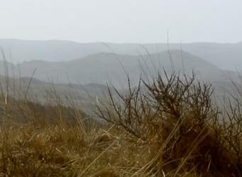 Friezen van de oude duinen film