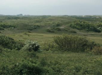 Ten noorden van Egmond - Wimmenummerduinen