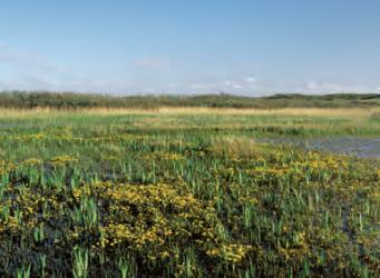 Duinvalleien en natte graslanden