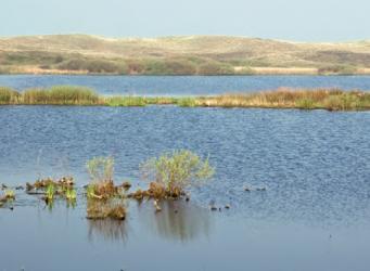 Van wadden naar polder en duin