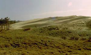 De achterkant van het gereactiveerde paraboolduin. Een muur van zand schuift richting dennebomen. Verlaten veld, Zuid-Kennemerland.