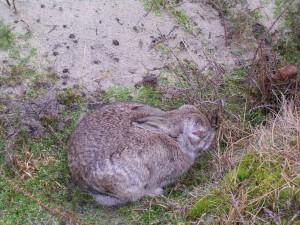 ziek konijn