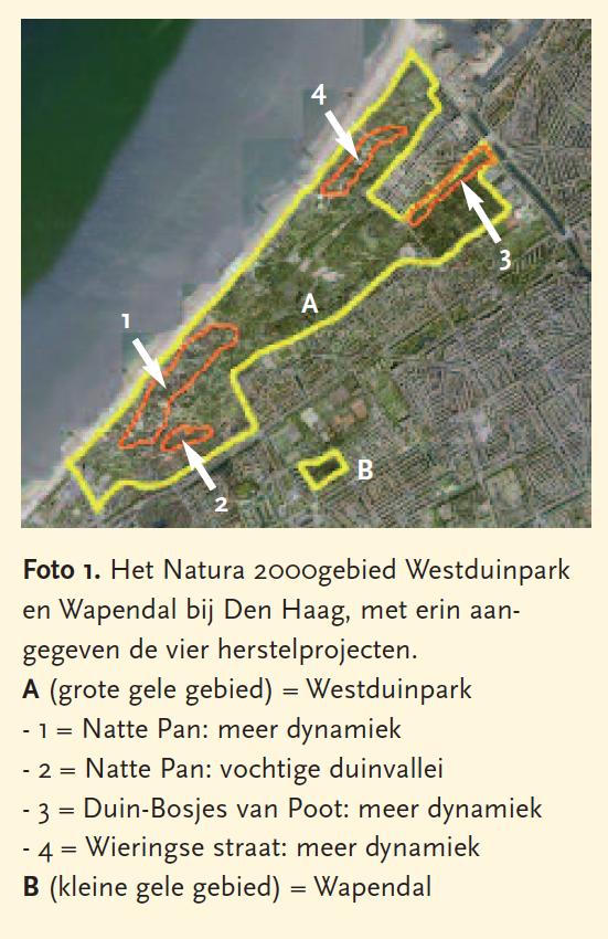 Natuurherstel in het Westduinpark2