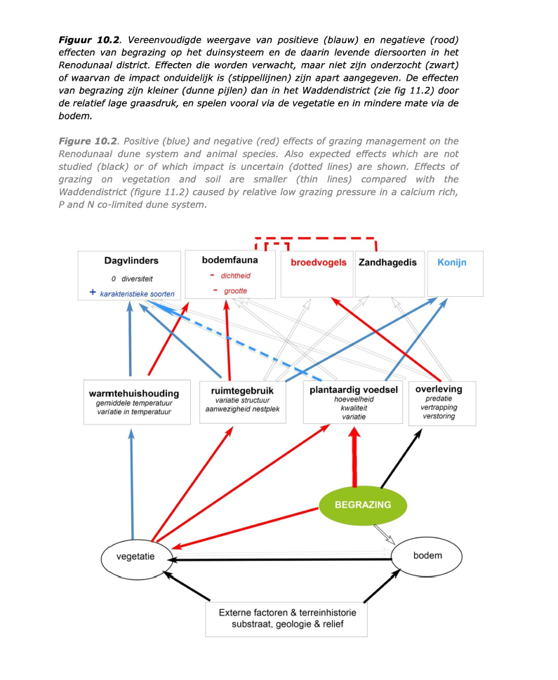 samenvatting effecten begrazing in renodunaal district