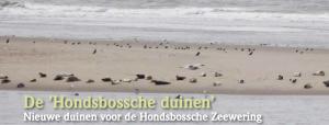 kop hondsbossche duinen