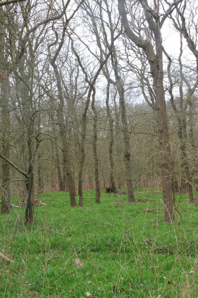 135 jaar oude spaartelgen in Hyacintenbos