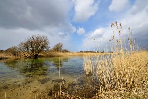 Infiltratiekanaal van PWN bij Castricum. Foto: Ronald van Wijk