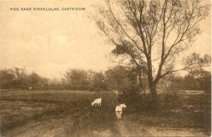 Kaart Prikkelvlak (hier verbasterd tot Rikkelulak); archief werkgroep Oud-Castricum