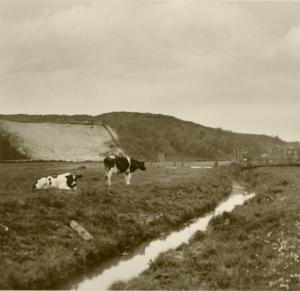 Oude kreekrest, in agrarisch gebruikt landschap oner het huidige klimduin, ca 1930