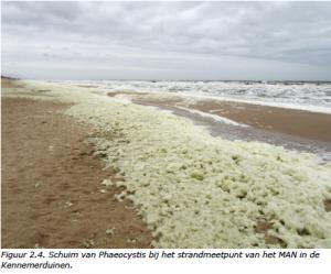 Schuim van Phaeocystis. Deze algensoort woekert in de kustwateren, mede als gevolg van de hoeveelheid meststoffen afkomstig uit de landbouw die via de rivieren de zee instroomt. Bron: Rijksinstituut voor Volksgezondheid en Milieu (RIVM), 2014