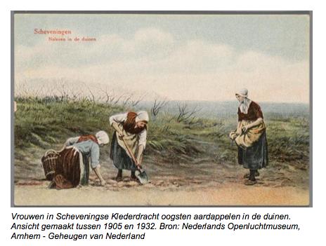 Vrouwen in Scheveningse Klederdracht oogsten aardappelen in de duinen.