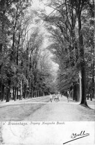 Leidsche Straatweg in het Haagsche Bosch (1905). Elektrochromie H.S. Speelman, Amsterdam. Collectie F. Beekman.
