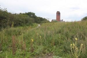Duingrasland in Bosjes van Poot met de hervormde kerk van Duindorp op de achtergrond
