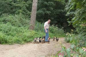 Veel hondenuitlaat in Bosjes van Poot zorgt voor een vermestingsprobleem