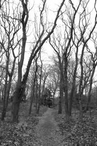 Spaartelgen van het oude eikenhakhout