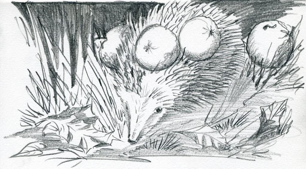 egel met appels (F.H.C. Hoogerhoud)