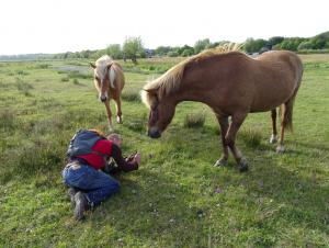 28 mei 2015 damlanderpolder, bergen foto rolf roos sipke gonggrijp met paarden DSC00143