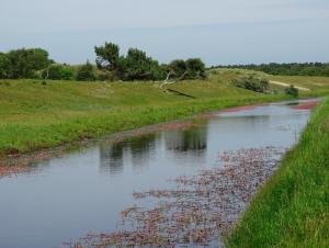 Waterwinkanaal Oranjezon met bloeiende veenwortel