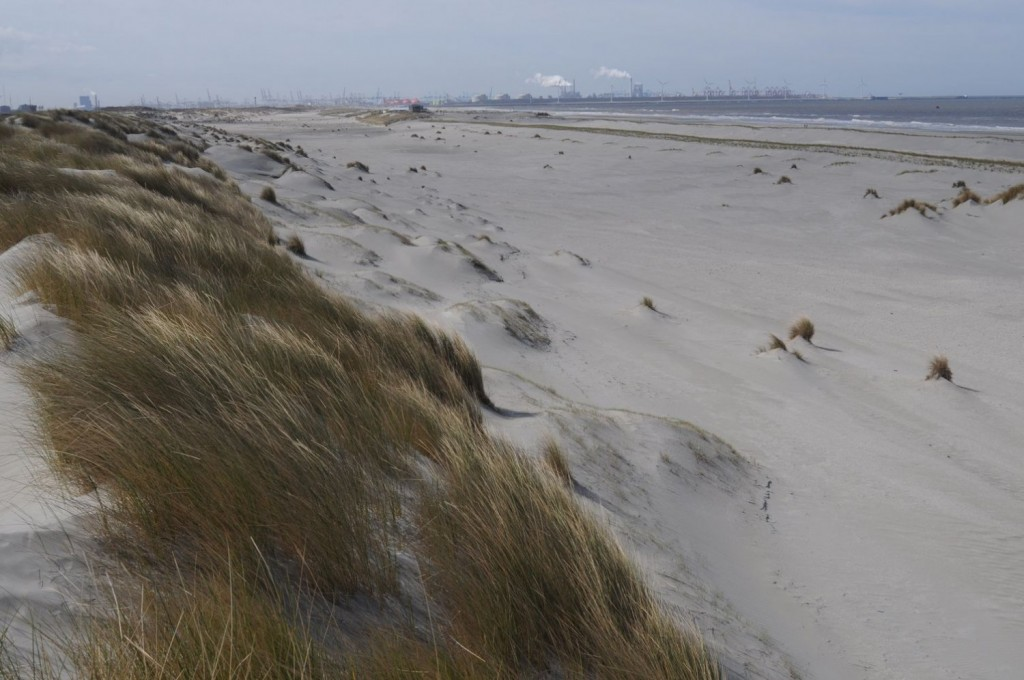 Spanjaards Duin gezien naar het zuiden. De werking van de wind is duidelijk te zien. Links de oude zeereep, daarvoor een nieuwe rij duintjes met veel vers zand, ingevangen door krachtige helmpollen. In het midden de nog droge, zich verlagende vallei. Rechts de nieuwe zeereep en daarachter de zee en Maasvlakte 1 op de achtergrond. Foto: Bert van der Valk