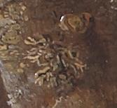 detail potter kortsmos