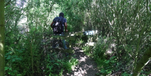 Paadje door wildernis voor je in het paradijs komt