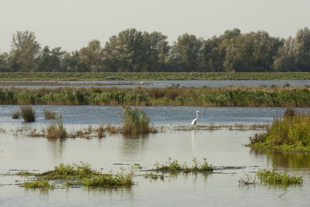 Biesbosch: ontpolderd landbouwgebied. RWS beeldbank