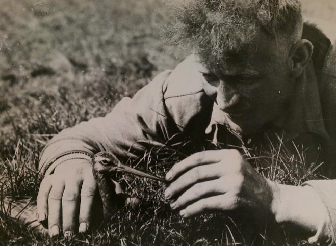 Nol Binsbergen was voor de oorlog een bekend vogelfotograaf en filmer, vergelijkbaar met Jan Strijbosch. Er is een spectaculaire foto van Strijbosch van Binsbergen die een grutto bij de snavel vat.
