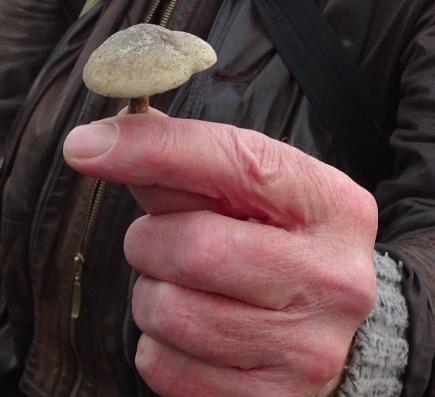kennemerstrand zeereeppaddenstoelen 2015-11-18 om 22.28.48