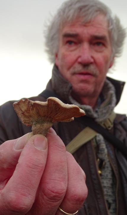 kennemerstrand zeereeppaddenstoelen 2015-11-18 om 22.29.10