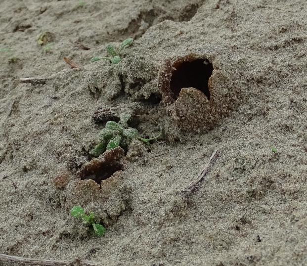 kennemerstrand zeereeppaddenstoelen 2015-11-18 om 22.30.25