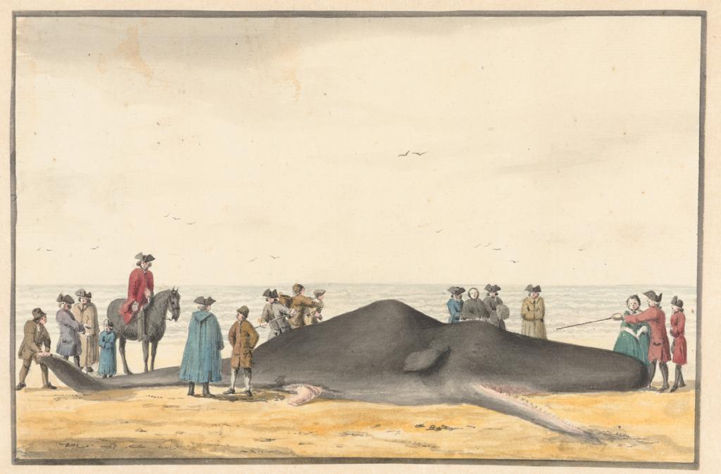 Gestrande potvis bij Wijk aan Zee/Zandvoort, aquarel, Vincent van der Vinne, 1762, Rijksmuseum Amsterdam