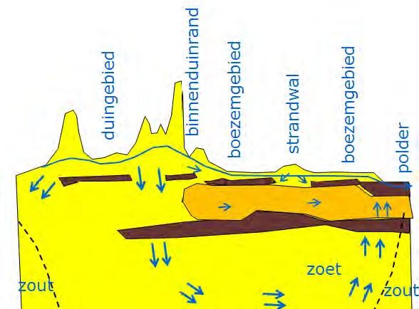 WarecoZK2013_fig3_grondwatersystemen_duinen
