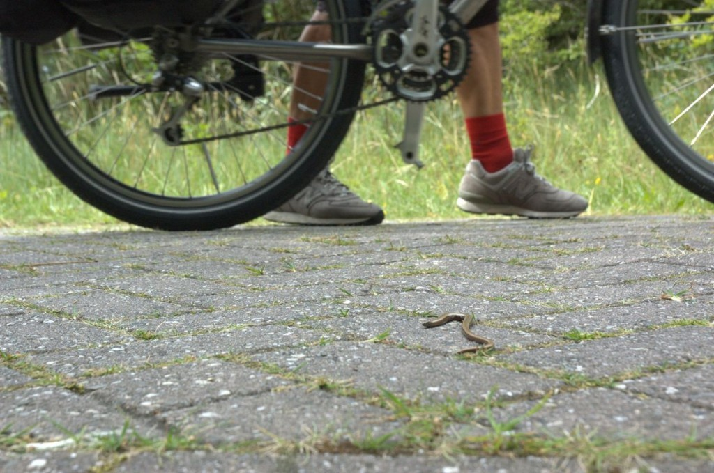 hazelworm fietspad