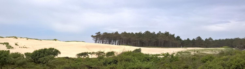 Bergen aan Zee duinen