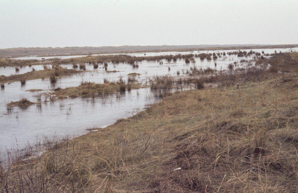 Foto 2.Het proefvlak in februari 1981. Rechts in het midden is een hoekpaal te zien. De gehele voorgrond behoort tot het duindeel van het proefvlak, van het lage deel is links voor een deel zichtbaar (onder water!). Op de achtergrond de stuifdijk.